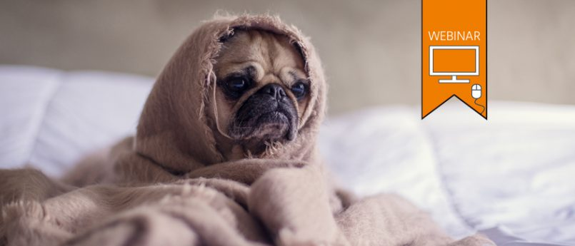 "Text:""WEBINAR"". A tired looking dog sitting on a bed, wrapped up in a wool blanket. Photo by Matthew Henry."