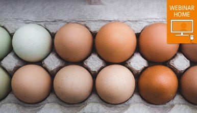 A dozen eggs in a carton. Watch webinar at home icon.