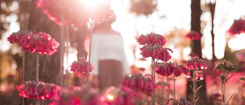 flowers forest sunshine